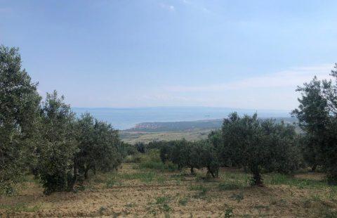 Olivenhain - Zeytinlik